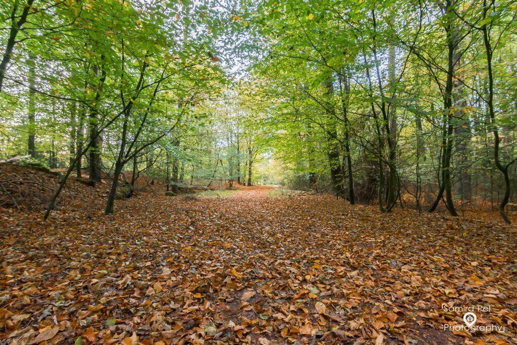 Herfst in het NP Dwingelderveld