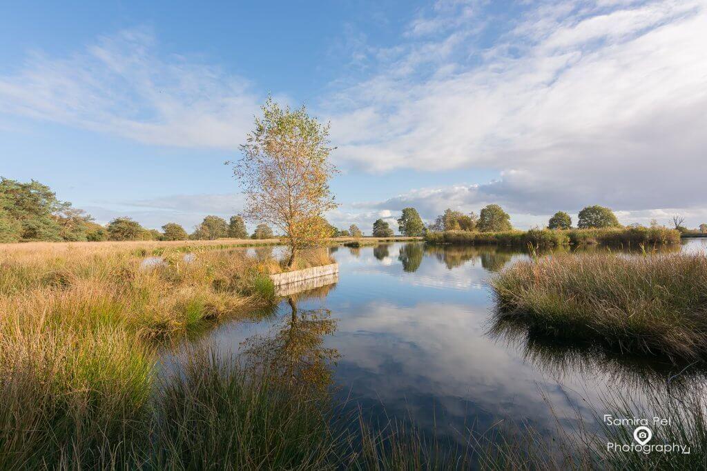Het Smitsveen in het National Park Dwingelderveld
