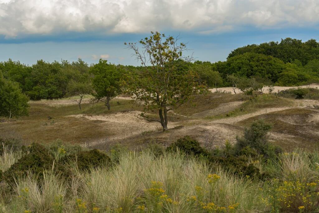 Duinlandschap in de Amsterdamse Waterleidingduinen