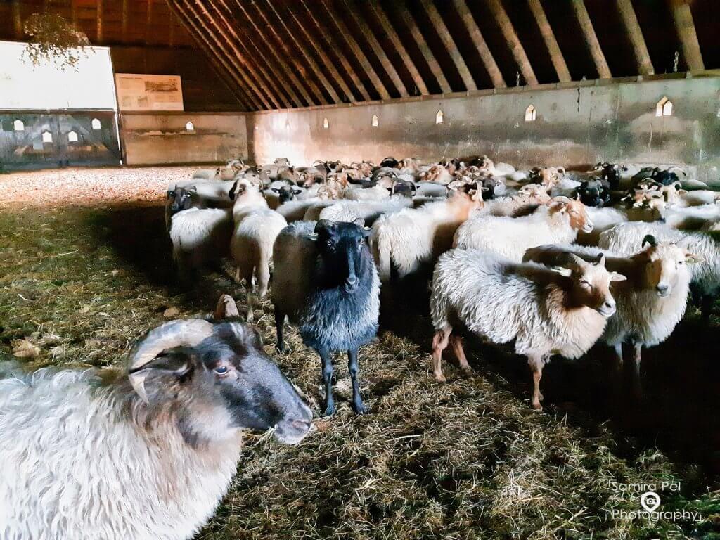 Sheepfold Achter 't Zaand in NP Dwingelderveld