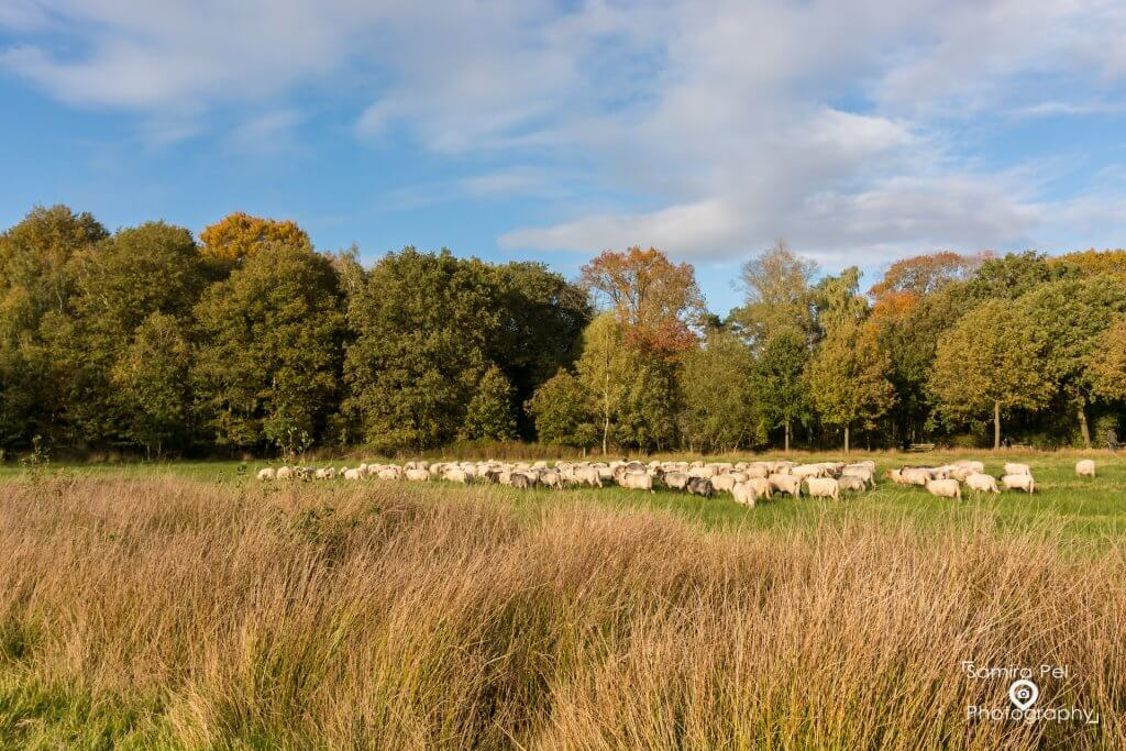 Sheepfold Achter 't Zaand in National Park Dwingelderveld